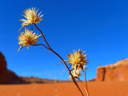 desert-82403_640
